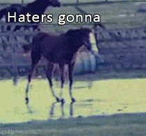 Haters gonna hate horse GIF LMAO