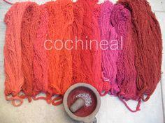 Travel Oaxaca's Natural Dye Textiles + Weaving Trail: One-Day Study Tour Shibori, Natural Dye Fabric, Natural Dyeing, Red Pigment, Pigment Coloring, How To Dye Fabric, Fiber, Weaving, Spinning