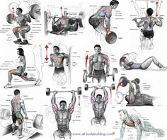 The Best Exercises to Include In Your Muscle Building Routine