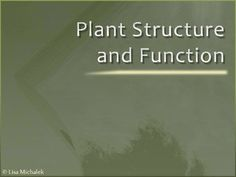 This PowerPoint Presentation contains 38 slides on the following topics: Plant Structure & Function, Tissues, Dermal Tissue System, Epidermis, Cuticle, Cork, Ground & Vascular Tissue, Xylem, Phloem, Plant Cells & Tissues, Roots, Taproot system, Adventitious roots, Cortex, Root hairs, Root cap, Stems, Shoots, Nodes, Internode, Buds, Nonwoody Stems, Herbaceous plant, Vascular bundles, Stomata, Monocot & Dicot stems, Pith, Woody Stems, Buds, Heartwood, Sapwood, Simple & Compound leaves. $5.00