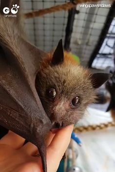 Go Animals Online Shop - Where Pets Feel at Home Cute Animal Videos, Cute Animal Pictures, Cute Little Animals, Cute Funny Animals, Cute Bat, Cute Baby Bats, Tier Fotos, Cute Creatures, Animal Memes