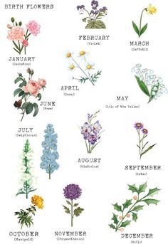 Birth Flower Family Print Tattoos And Body Art flower tattoos Dainty Tattoos, Mini Tattoos, Subtle Tattoos, Tatouage Xo, Birth Month Flowers, February Birth Flowers, Flowers For Each Month, Birth Flower Tattoos, Name Flower Tattoo