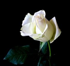 Halsey, Dua Lipa, Rita Ora, and other celebrities will wear white roses to this Sunday's Grammy Awards in support of the Time's Up moveme