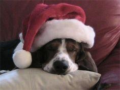 Christmas Basset!