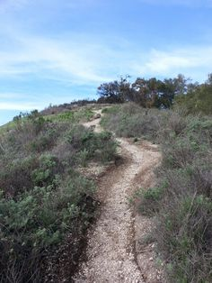 Ontario Ridge Trail in Avila Beach, CA