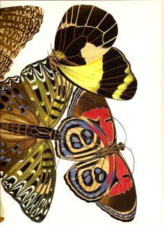 Nature's Patterns........BUTTERFLIES WINGS Botanicals Vintage Art Print  €3