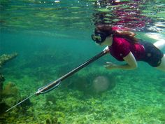 Spear Fishing- brings back memories on the homosassa river! Grouper, reds, bass!