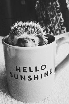 Hello Sunshine Daizo. :)
