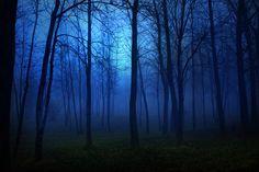 Hermoso bosque azul wallpaper