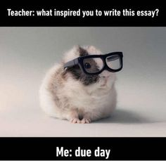 Funny Memes - [Teacher: What Inspired You To Write This Essay?]