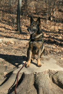 Support retired military dogs
