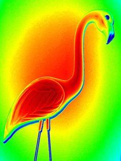 Randall Weidner - Flamingo Sunset