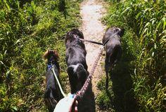 🐕 WALK WITH DOGS🚶 PROCHÁZKA SE PSY 🐶 ••• #walk #dogs #prochazka #pes #nature #tri #three #czech #podzim #autumn #sunyday #slunecnyden #happiness #radost #priroda #pets #zviratka #🐶 #🐕 #🚶#followme  #❤