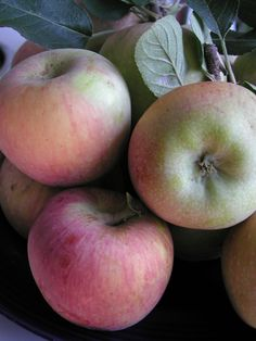 My first apples from Hillview Pottager, Scone, NSW, Australia (photo won a prize at Scone Art Show)