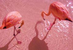 pink flamingos secretdreamlife.tumblr.com