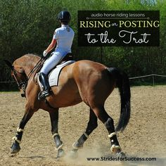 Have you ever sat down (no pun intended) and thought about how correct your rising or posting in trot actually is? Rising or posting in trot is one of the first aspects we learn when starting out r…