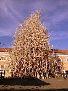 Big bambù - Macro - Roma