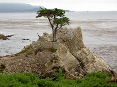 The Cypress Tree by Vitor Rodrigues, via Flickr