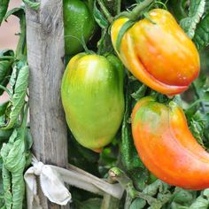 Plantation, Permaculture, Garden Plants, Stuffed Peppers, Vegetables, Food, Concepts, Illusion, Boards