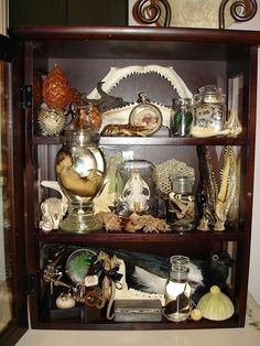 A Cabinet of Curiosities - A Complete and Full Curiosity Cabinet - Natural History Theme - Beautiful Taxidermy Cabinet Of Curiosities, Natural Curiosities, Witch House, Natural History, Creepy, Archaeology, Antiques, Vintage, Home Decor