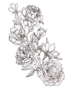 Peonies And Magnolias                                                       …