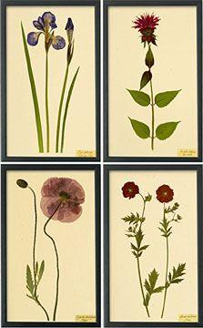 Botanical Prints I, from Shaker Workshops