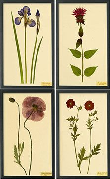 Botanical Prints I, from Shaker Workshops