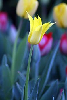 watcher-of-the-skies:    Flower 72 by *d0rktastik