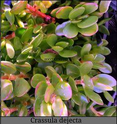 Cactus, Natural, Plants, Collection, Plant, Nature, Planets, Au Natural