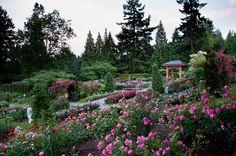 Portland Rose Garden, Oregon