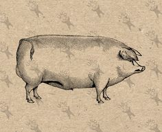 Hog Pig Vintage image Instant Download picture Digital printable retro clipart graphic stickers decor prints fabric transfer etc HQ 300dpi by UnoPrint on Etsy