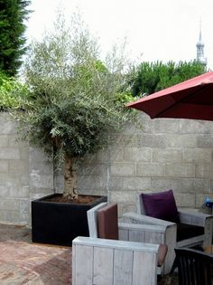 I guess this is a great way to have an olive tree if I don't want anymore roots in the ground Courtyard Landscaping, Front Courtyard, Pallet Projects, Projects To Try, Olive Tree, Mediterranean Style, Go Outside, Roots, Deco