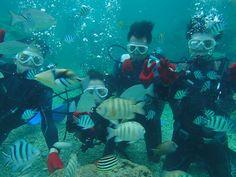 海の中綺麗でしたね~! - http://www.natural-blue.net/blog/info_4316.html