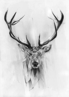 large format deer or elk line drawing - Google Search