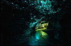 Cuevas de Waitomo. Nueva Zelanda.