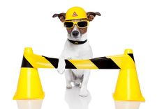 The FDA released a statement this week detailing how it has warned fifteen different companies for illegally selling products containing cannibidiol (CBD), and the agency addressed safety concerns it has regarding this newly popular ingredient. Chihuahua, Dog Stock Photo, Visualisation, Jack Russell Terrier, Under Construction, Dog Photos, Household Items, Dog Love, Tigger