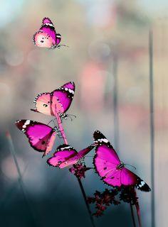 ~~Freedom ...   pink butterfly fantasy   by Mustafa Öztürk~~