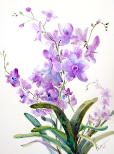 Original Large watercolor Painting Orchids 18 X 24 by ORIGINAL ONLY, $62.00