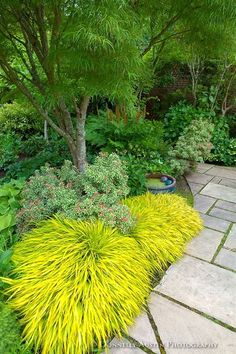 Vashon Island, WA: Japanese forest grass (Hakonechloa macra 'All Gold') lights up a shadel garden featuring pieris, hellebores and hostas in Froggsong Garden in summer  #JapaneseGardens