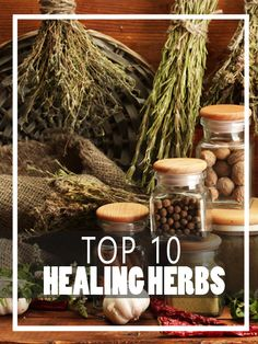 Top 10 Healing Herbs - HomesteadingandHealing
