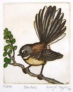 New Zealand prints at Art by the sea, fine art gallery in Devonport, Auckland, New Zealand Bird Drawings, Animal Drawings, Intaglio Printmaking, New Zealand Art, Nz Art, Rare Birds, Sketchbook Inspiration, Bird Prints, Fine Art Gallery