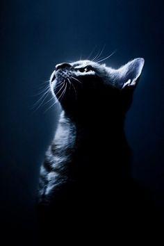 Kitten Animal HD desktop wallpaper, Cat wallpaper - Animals no. Warrior Cats, I Love Cats, Cool Cats, Cat Background, Cute Cat Wallpaper, Mobile Wallpaper, Cat Pose, Cat Silhouette, Here Kitty Kitty