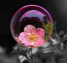 BUBBLE~☯pink flower...