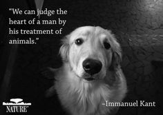 We can judge the heart of a man by his treatment of animals. ~Immanuel Kant   www.relationshipsreality.com