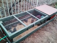 Quail Pen and all things Quail - Quail in their coop outside. 4 wks old Portable Chicken Coop, Backyard Chicken Coops, Chicken Coop Plans, Building A Chicken Coop, Diy Chicken Coop, Backyard Farming, Chickens Backyard, Raising Quail, Raising Farm Animals