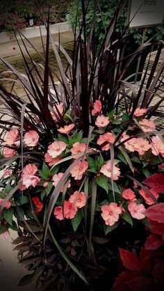 Coral Impatients & Purple Grass Nice combination - All For Herbs And Plants Container Flowers, Flower Planters, Container Plants, Garden Planters, Container Gardening, Gardening Zones, Gardening Vegetables, Gardening Tips, Outdoor Flowers