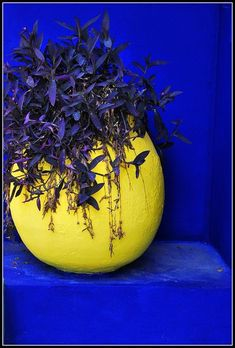 Marrakech - cobalt blue with bright, almost acid yellow. Mellow Yellow, Blue Yellow, Art Vert, Color Combos, Color Schemes, Moroccan Garden, Himmelblau, Colour Board, Deco Design