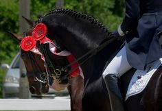 #equine #dressage #equestrian #sport #red #ribbon #black #horses #horse