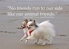 No friends run to our side like our animal friends #dogchienperro