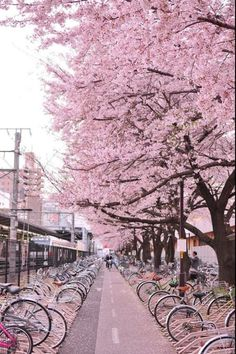 Japan street of sakura: Cherry blossom Places To Travel, Places To Visit, Travel Destinations, Cherry Blossom Japan, Pink Blossom, Japanese Cherry Blossoms, Japanese Blossom, Tree Wallpaper, Nature Wallpaper